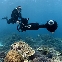 Study confirms we've had 40% loss of corals around the globe in the last 30 years