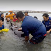Pilot whale dies off Thailand after eating 80 pastic bags