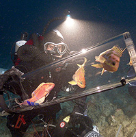 New invention safely transports unknown, deep-dwelling fishes to the ocean's surface